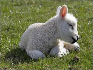 Hunger for the Lamb