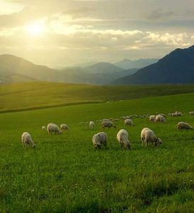 Wait for Him in Green Pastures