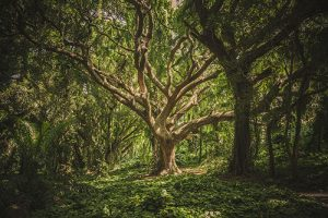 Predilection for Knowledge – The Tree