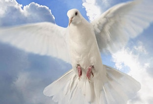 The Holy Spirit is the Spirit of Christ and Life of Christ